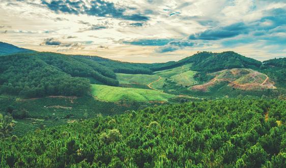 意大利森林面积十年增长5% 资源利用率木材较高
