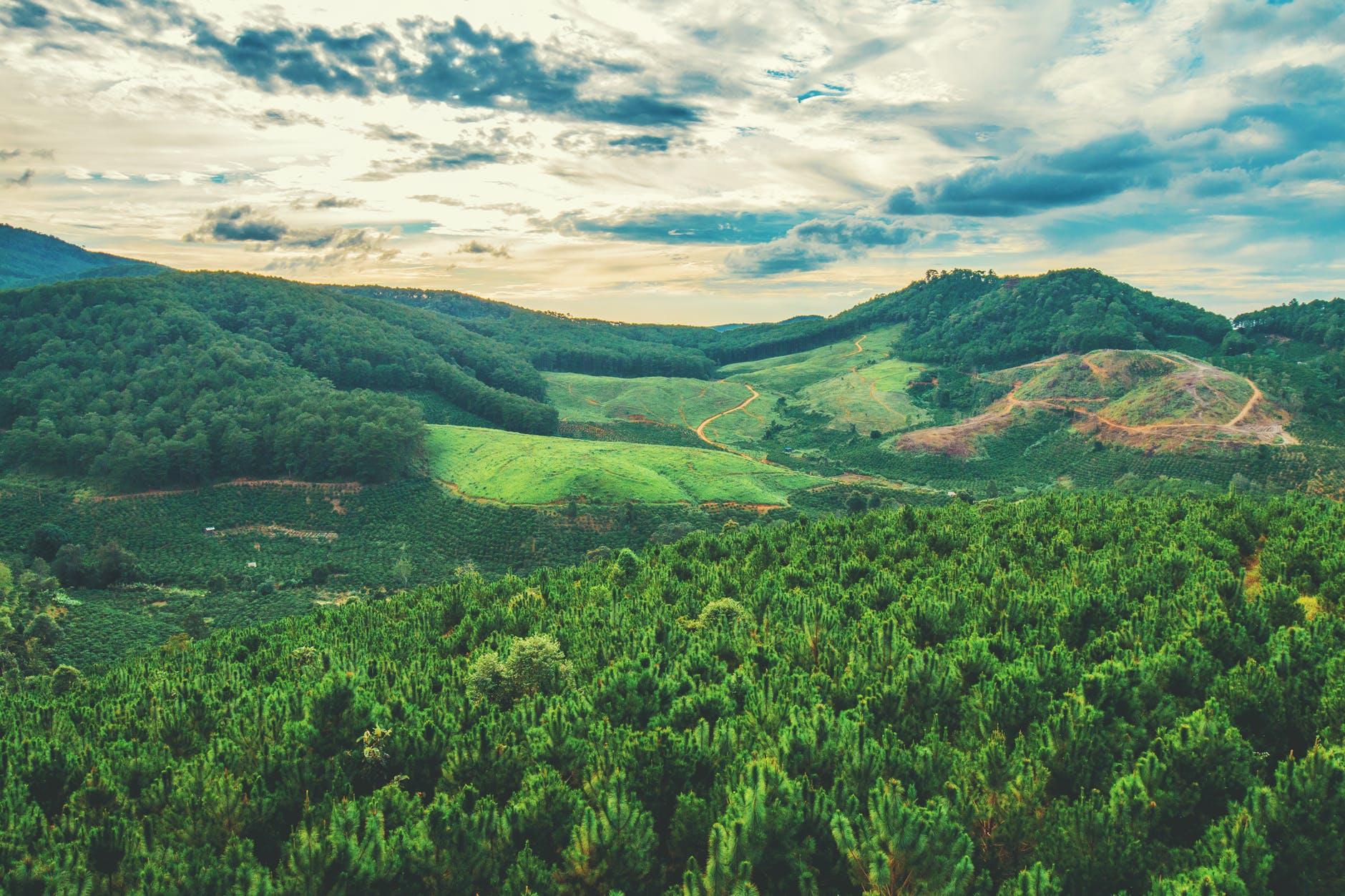 加拿大联邦政府正在加紧努力开发亚太木材市场